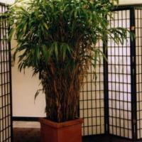 bambus verleih. Black Bedroom Furniture Sets. Home Design Ideas
