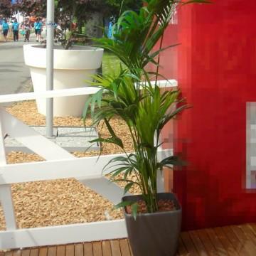 kentie howea forsteriana palme im lechuza topf palmen. Black Bedroom Furniture Sets. Home Design Ideas