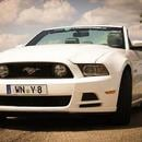 Ford Mustang Cabrio/Coup� - V8 mit  412PS
